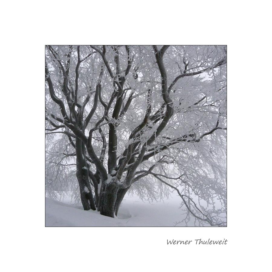 Wetterbuche Knüll