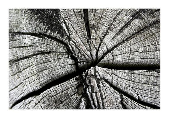 Wetterholz
