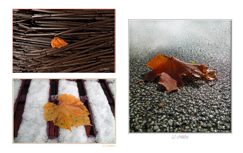Wetterkapriolen im November