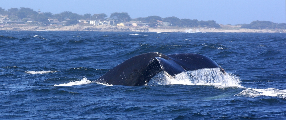 ... Whale Watching ... #1