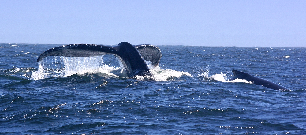 ... Whale Watching ... #2