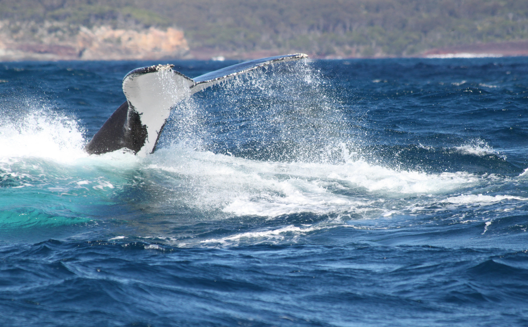 Whale Watching #3