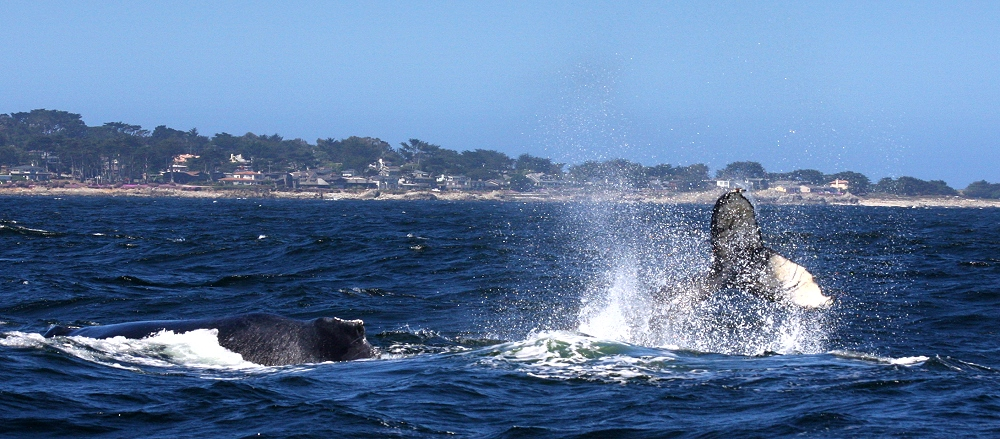 ... Whale Watching ... #3