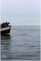 Whale Watching- Auf den Spuren von Captain Ahab2