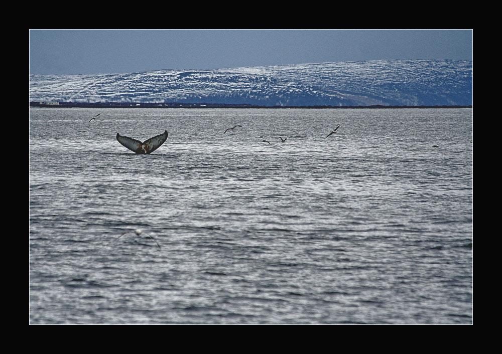 Whale Watching- Auf den Spuren von Captain Ahab3