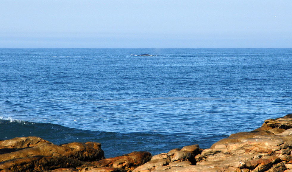 Whale Watching bei Cape St. Francis