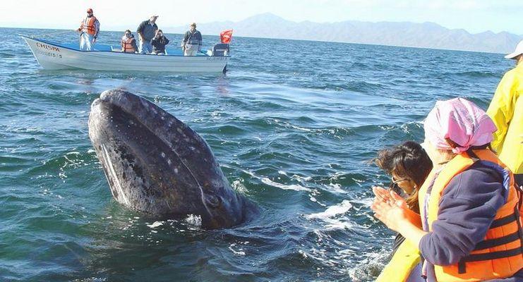 Whale watching: wer beobachtet wen...?
