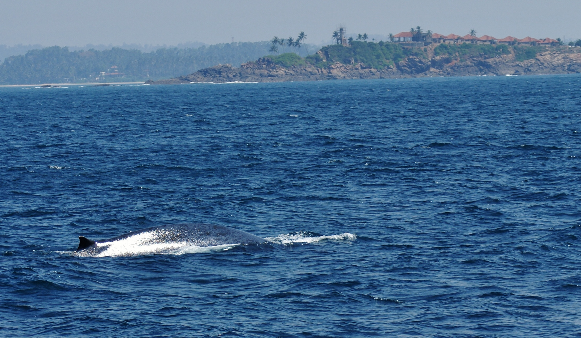 ...Whale whatching in Mirissa....