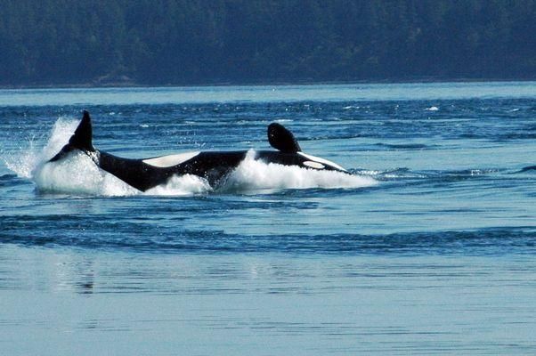 Whale#3