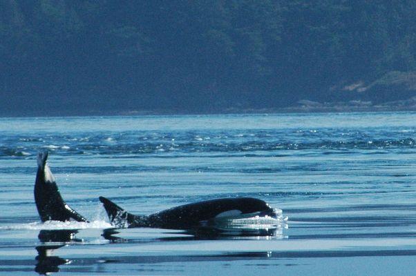 Whale#4