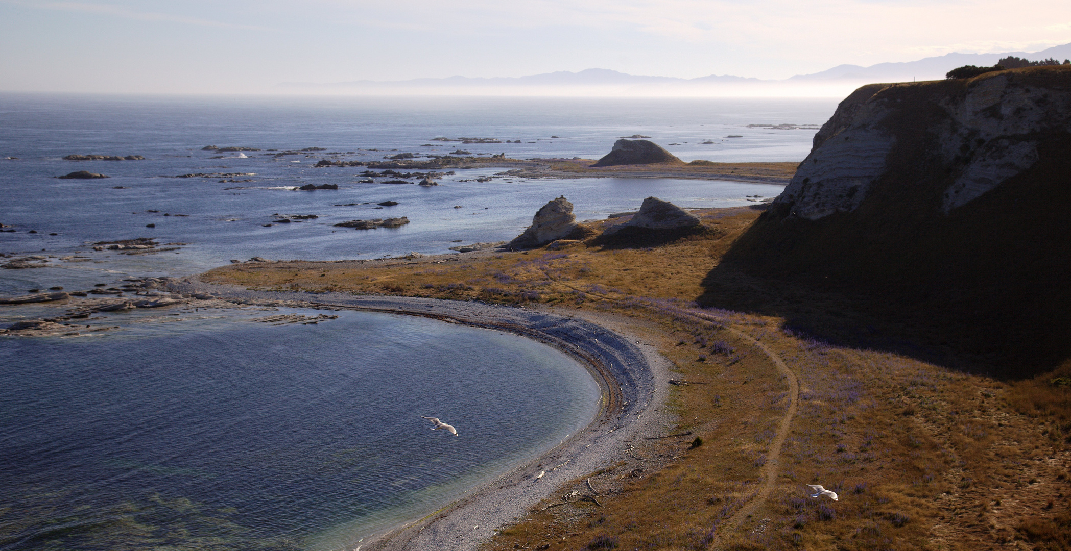 Whalers Bay (Kaikoura Peninsula Cliff Top Walk)