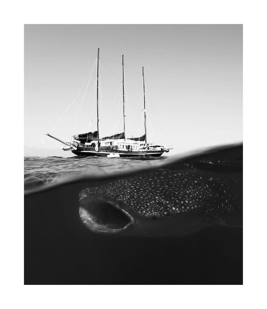 Whaleshark & Sailship