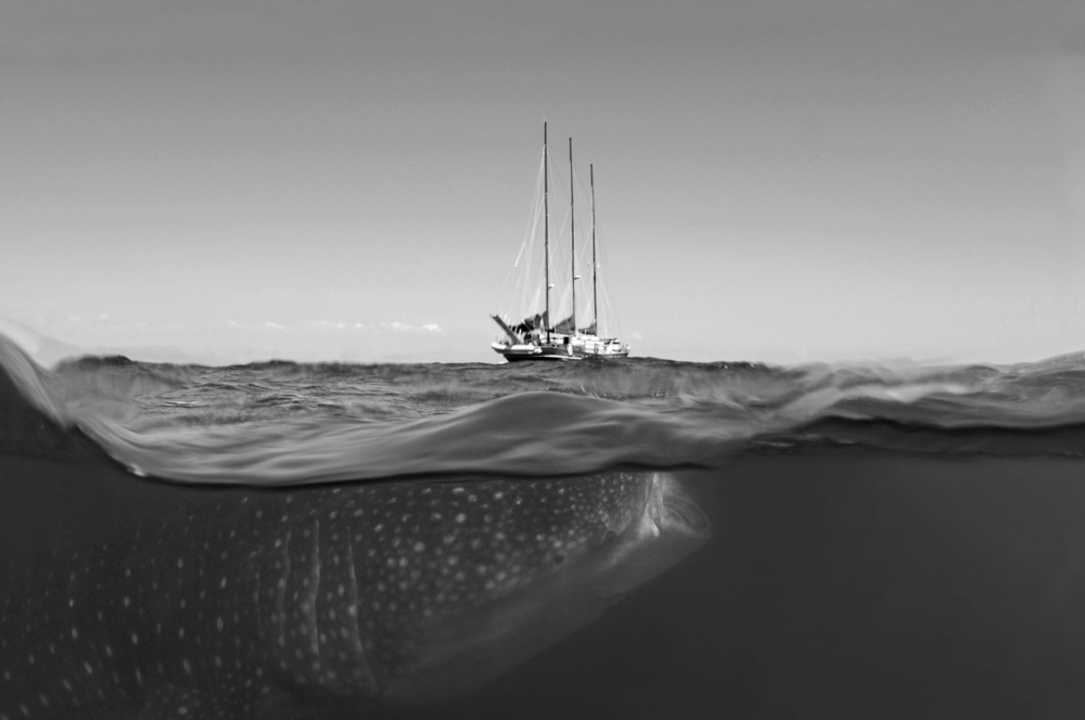 Whaleshark & Sailship b&w