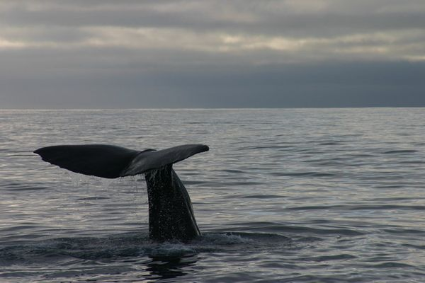 Whalewatching in Kaikoura/Neuseeland