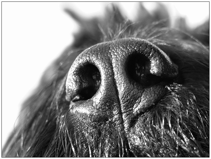 What a nose ;-)