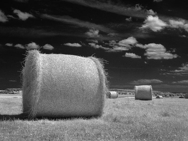 wheat bales 2006