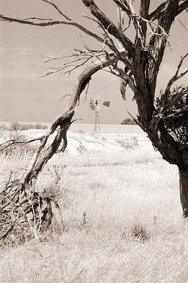Wheatbelt