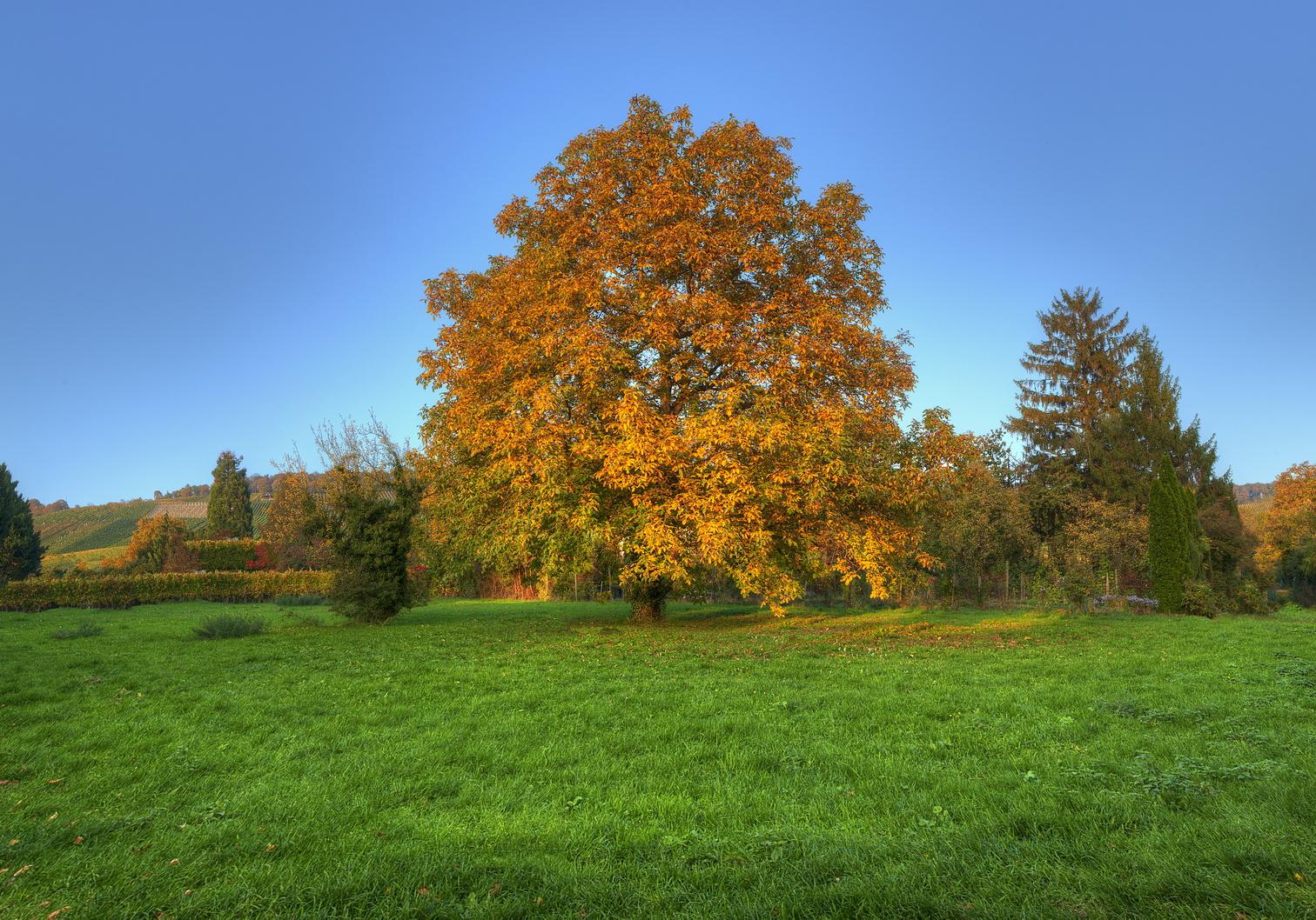 ... When Autumn Comes