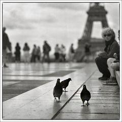 when doves walk