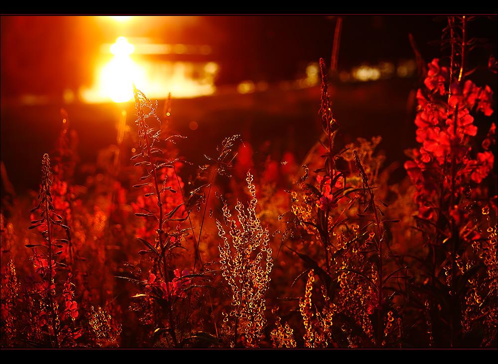 When Evening Glows