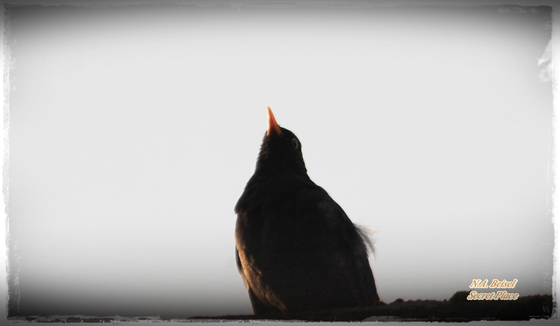 When The Black Bird sings Hallelujah :)