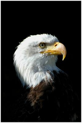 When the eagle cry