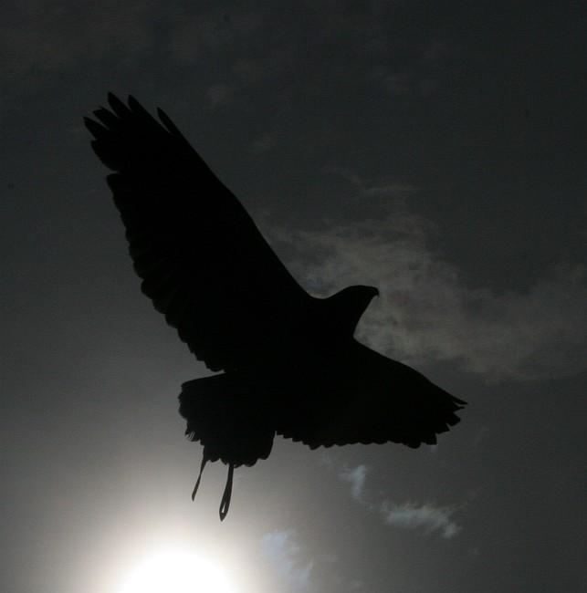 When the last eagle flies... (Reload)