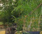 Whisky und das Katzengras