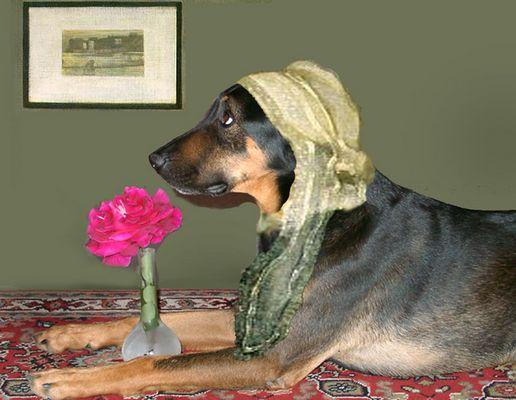 Whistler's Dog