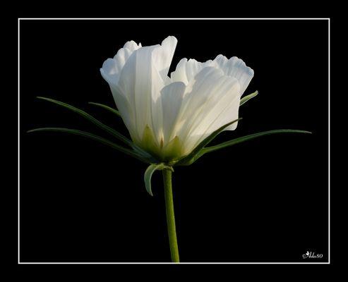 ---WHITE---
