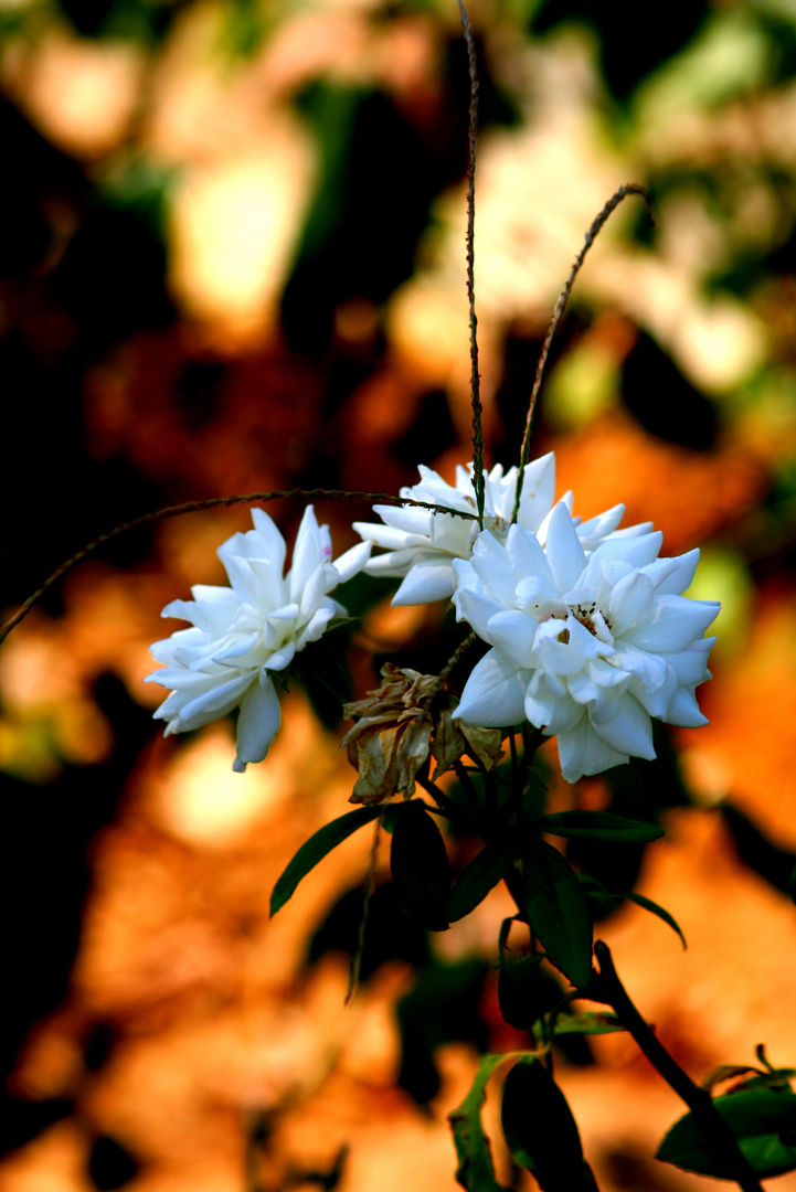 ...white and colourful...