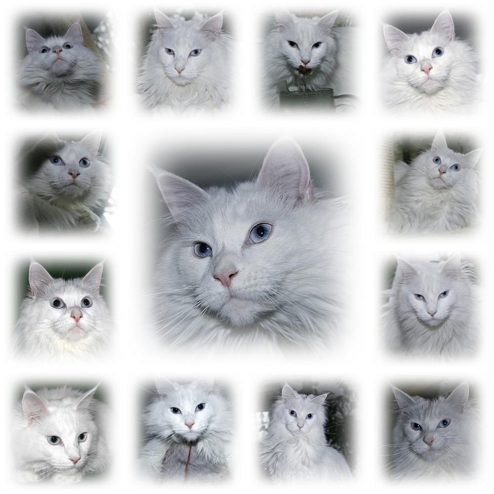 white Dreams :-))))