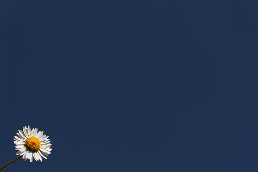 white flower - blue sky
