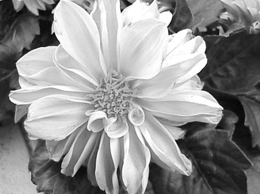 white flower for life