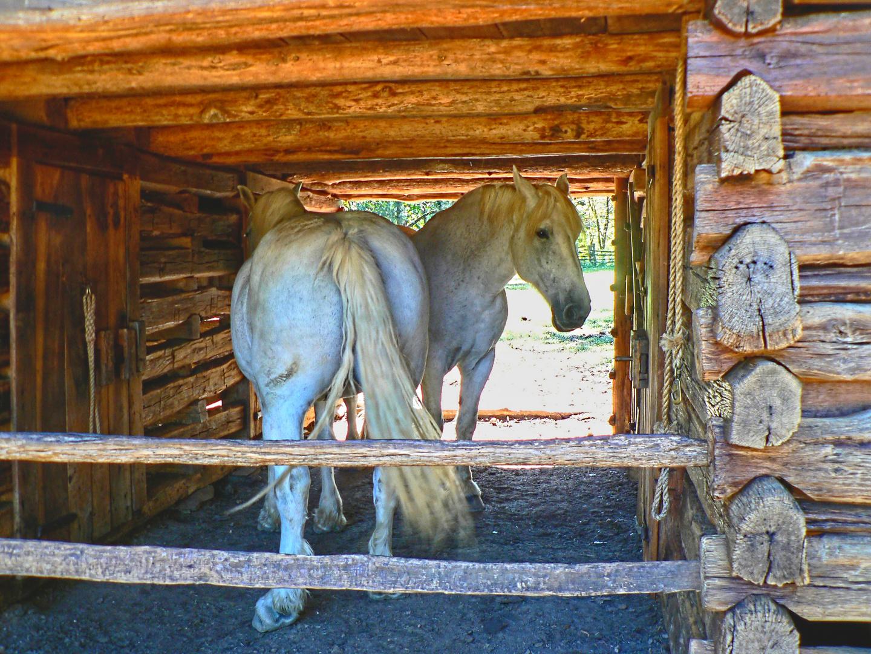 White Horse(s)
