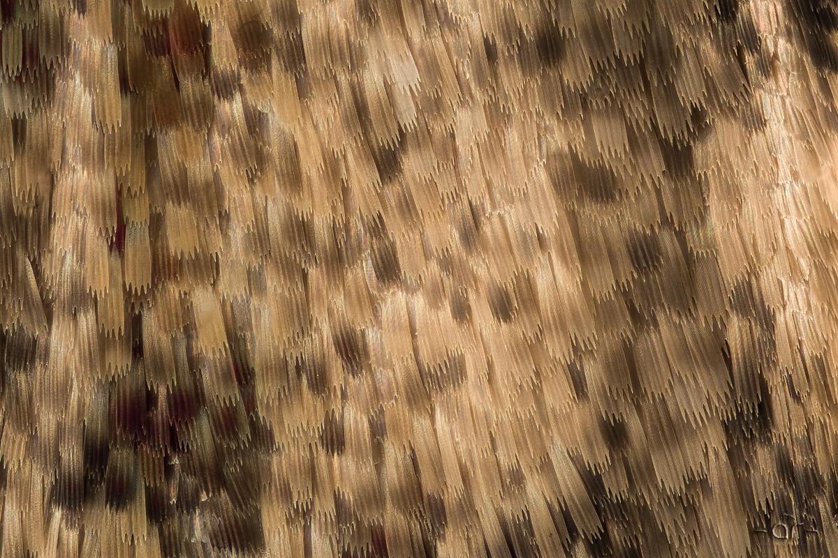 white kakadu - Schuppenkleid...