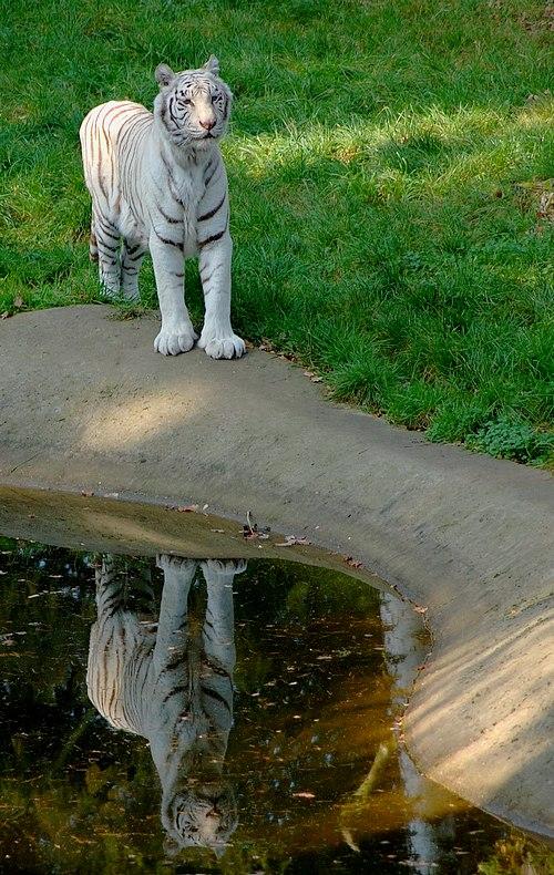 White - Life im Spiegel