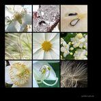 . white nature .