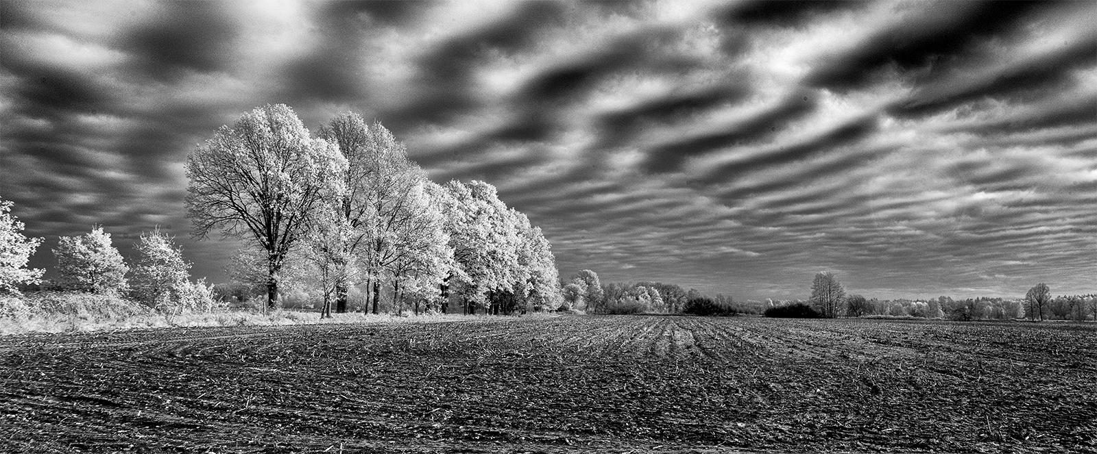 ...white november...