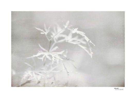 .white plants.