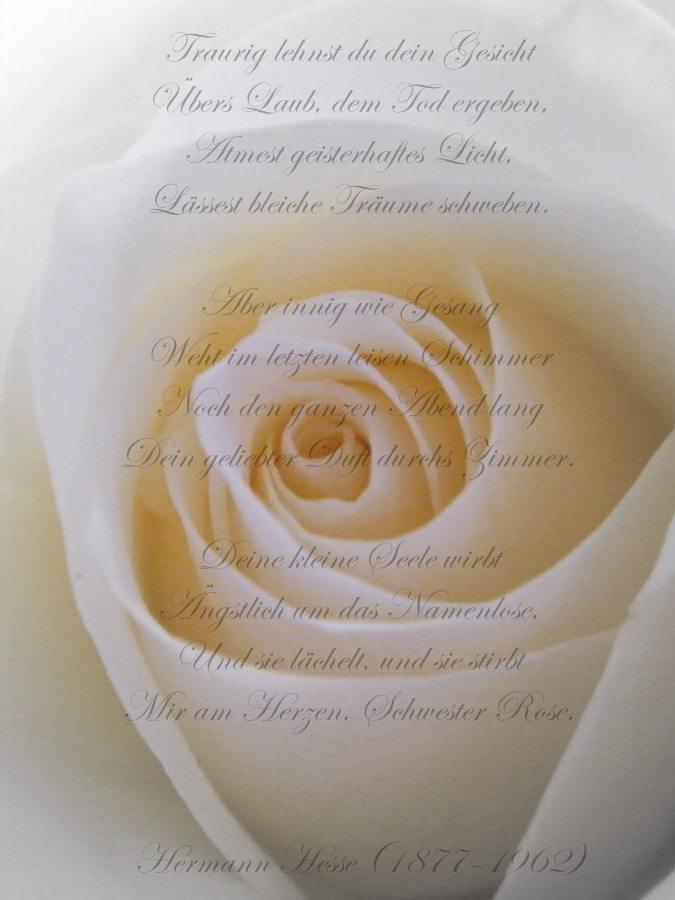 ~White Rose~