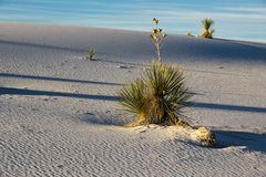 White Sands (2)
