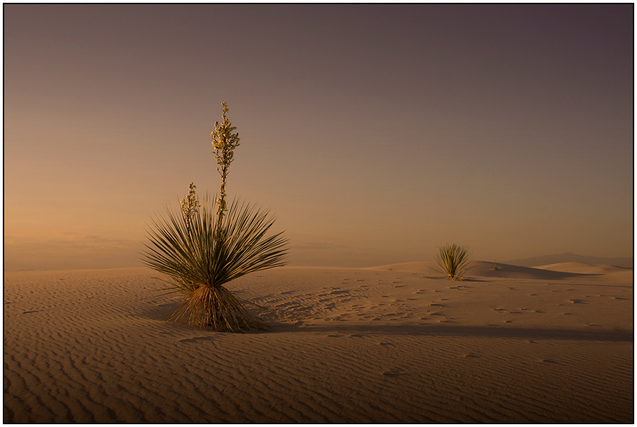 White Sands einmal anders