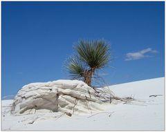 white sands national monument (2)