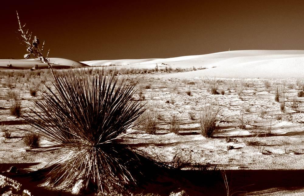 White Sands NM / Bush