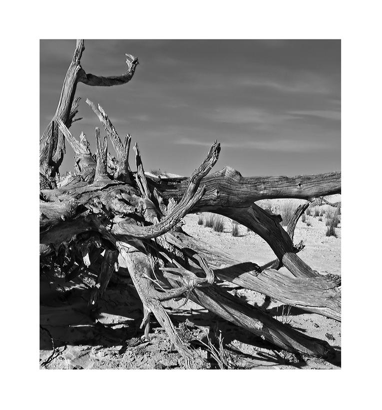 White Silence in black & white II