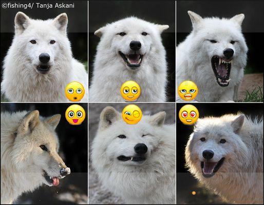 white smileys