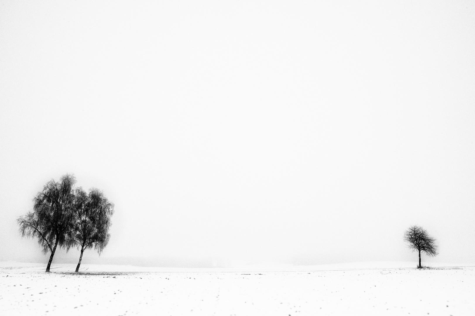 White Snow #2