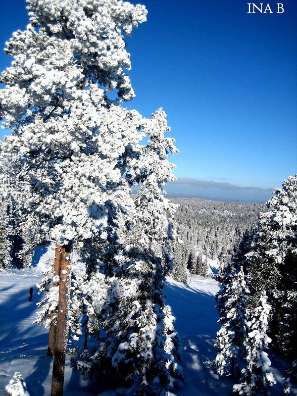 White trees.