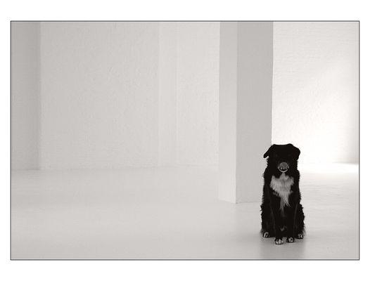 white with dog II